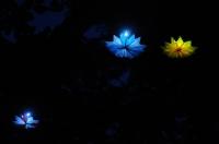 Hvězdy a sny
